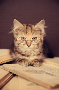 A cute adorable kitten wearing glasses reading a book