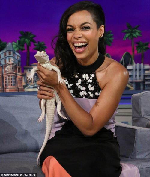 Rosario Dawson is also on a late night talk show, laughing and holding a baby albino alligator.