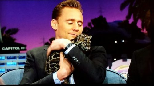 Tom Hiddleston is on a night-time talk show, cuddling a leopard cub. He looks super delighted and the cub is so fuzzy, you guys. SO FUZZY.