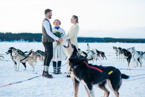 Wedding in the middle of a lot of sled dogs.