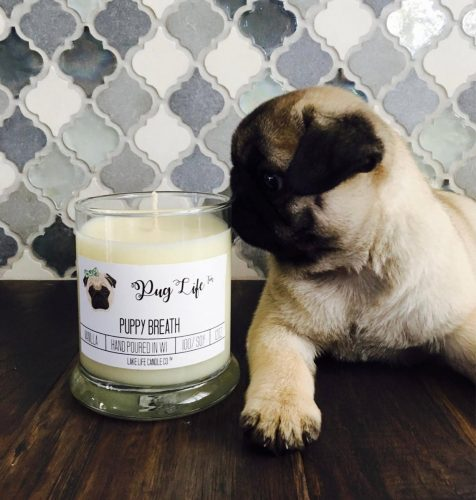 A candle in a white glass jar with a cute pug puppy sniffing it.