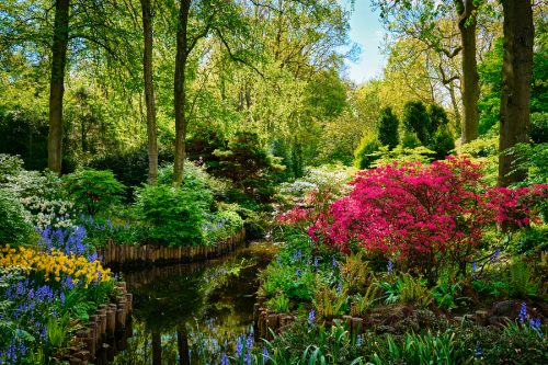 Keukenhof flower garden, also known as the Garden of Europe. One of the world's largest flower gardens. Lisse, the Netherlands.