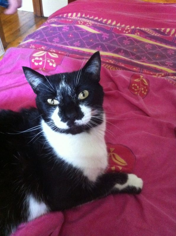 a black and white cat lounging regally atop a pink comforter