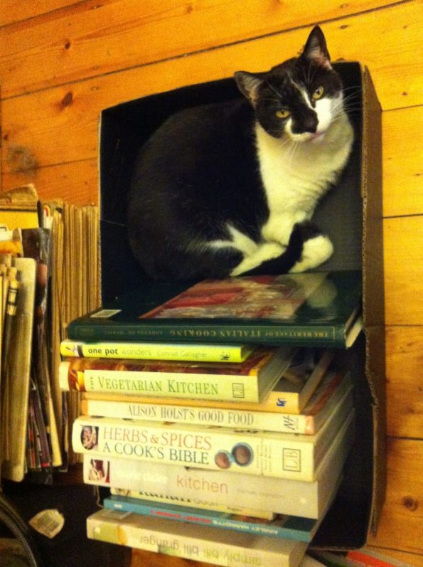 A black and white cat sitting inside a bookshelf box atop a stack of books