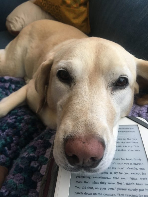 A blonde dog with a big lovely nose resting her head on an ebook reader