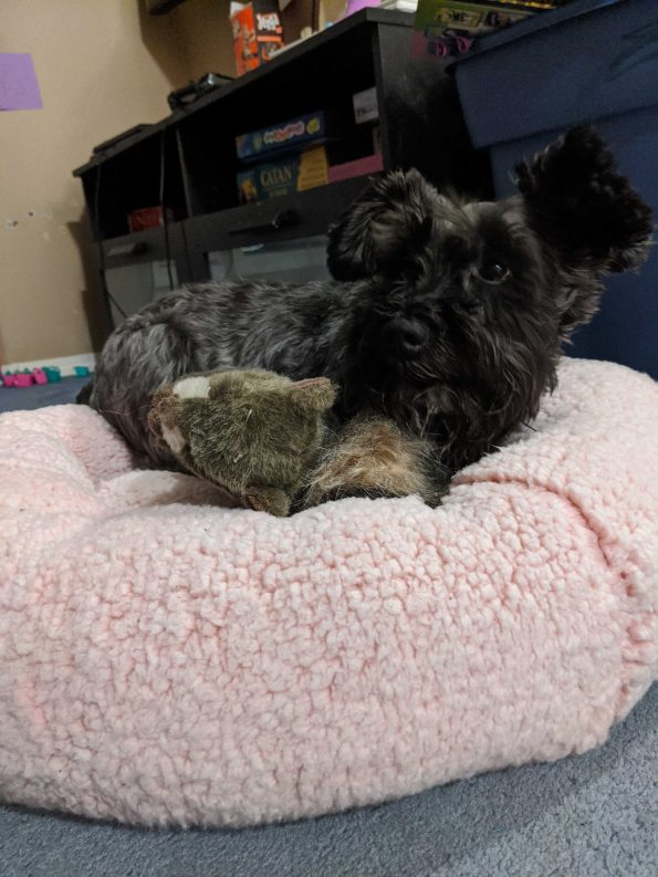 a terrier dog with grey and brown fur on a very very fluffy pink pillow bed I want one now