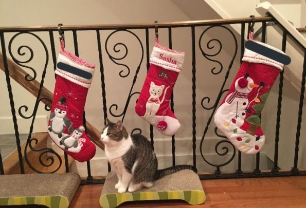three red stockings hanging on the bannister with Sasha's in the middle