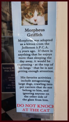 Morpheus Griffith the Cat who lives at the French Quarter vet clinic