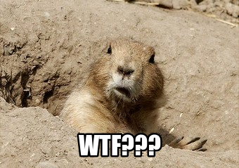 prairie dog with odd face captioned WTF