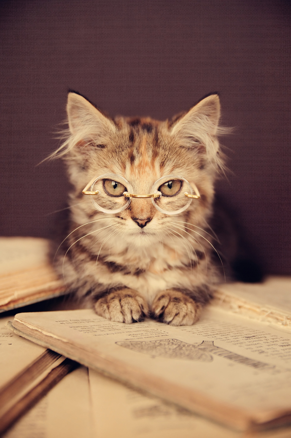A close up of a kitten wearing photoshopped glasses glaring on top of a book.